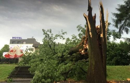 Nawałnica nad powiatem. Silny wiatr przewracał drzewa i uszkadzał...