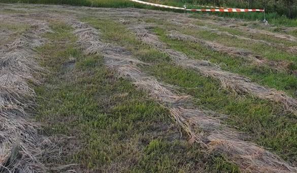 Prokuratura o masakrze kosiarką na łące w Rzykach: