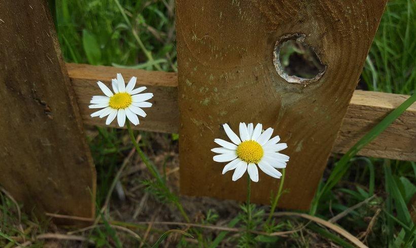 Nawet w listopadzie kwiaty kwitną jak latem