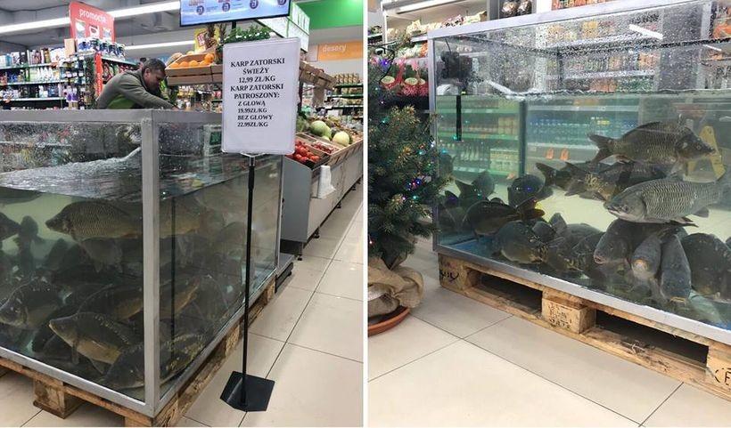 Karpia zatorskiego można kupić w Wadowicach w sklepie Stokrotka