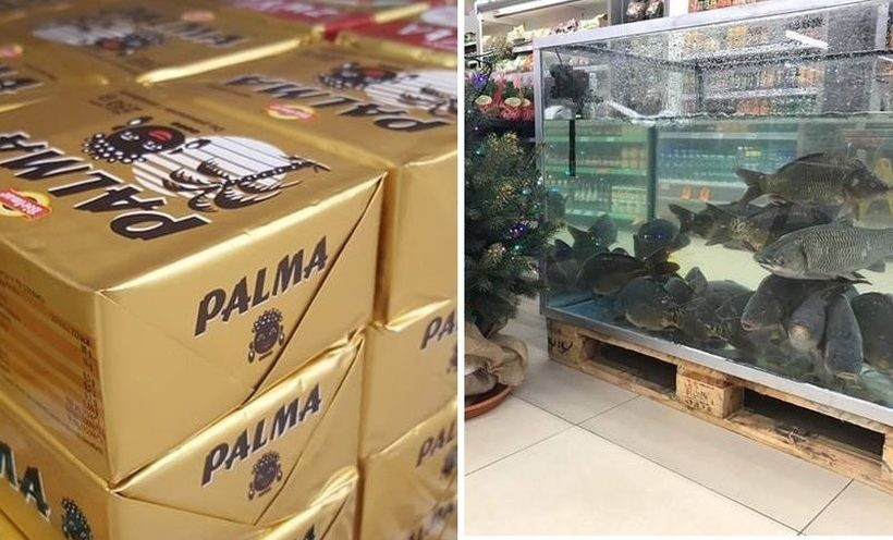 Palma i karp zatorski w rewelacyjnych promocjach w Stokrotce