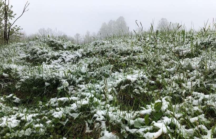 Śnieg na Leskowcu (5.05)