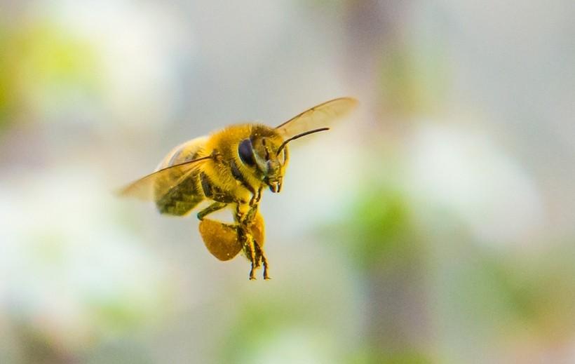W Wysokiej padło pięćdziesiąt pszczelich rodzin. Policja prowadzi śledztwo