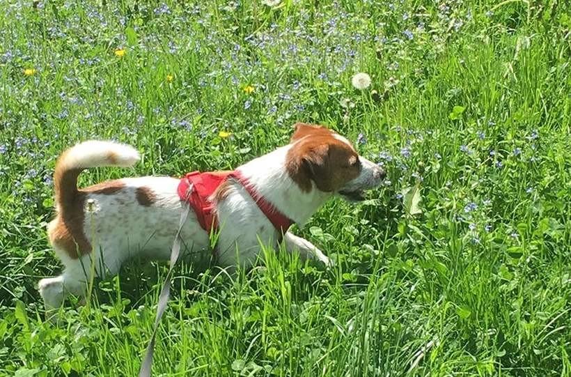 Uwaga! Ktoś podtruwa zwierzęta na osiedlu Kopernika w Wadowicach