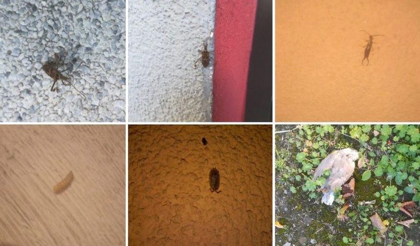 Od kilku dni mieszkańcy wysyłają nam zdjęcia insektów, które ich rzerażają i wchodzą im do mieszkań