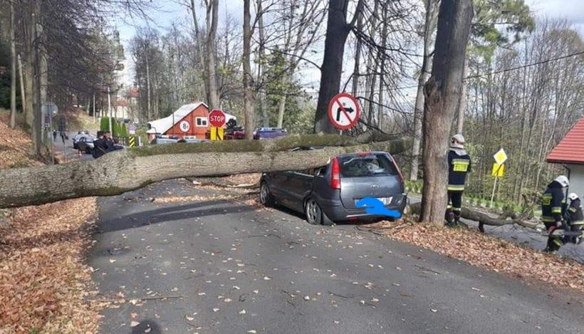 Drzewo spadło na samochód