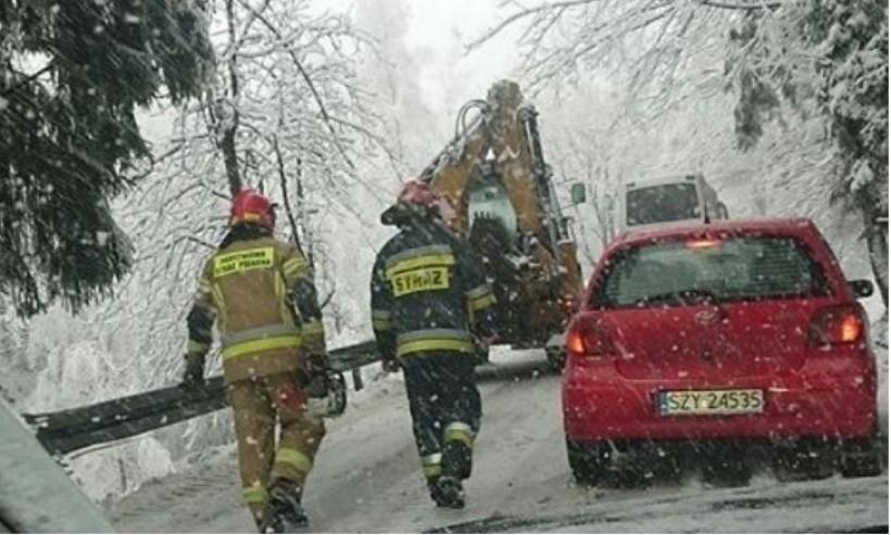 Uwaga na drogach! Drzewo runęło na ulicę, zwaliło się pod ciężarem śniegu