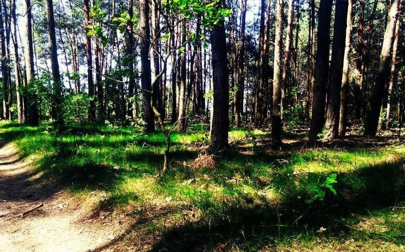 Przez epidemię do 11 kwietnia bezwzględny zakaz wstępu do lasów i parków