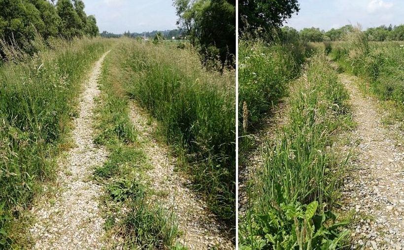 Ścieżki rowerowe w Rokowie zarastają trawą