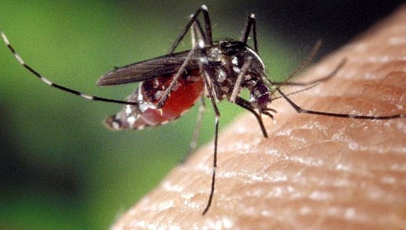 Wadowice zbroją się przeciwko komarom. Miasto liczy na odsiecz jerzyków