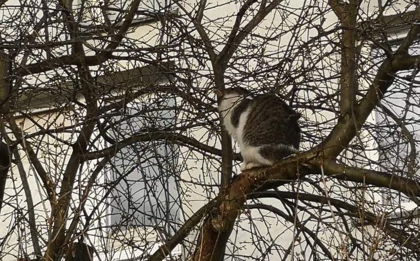 Bazie kotki?