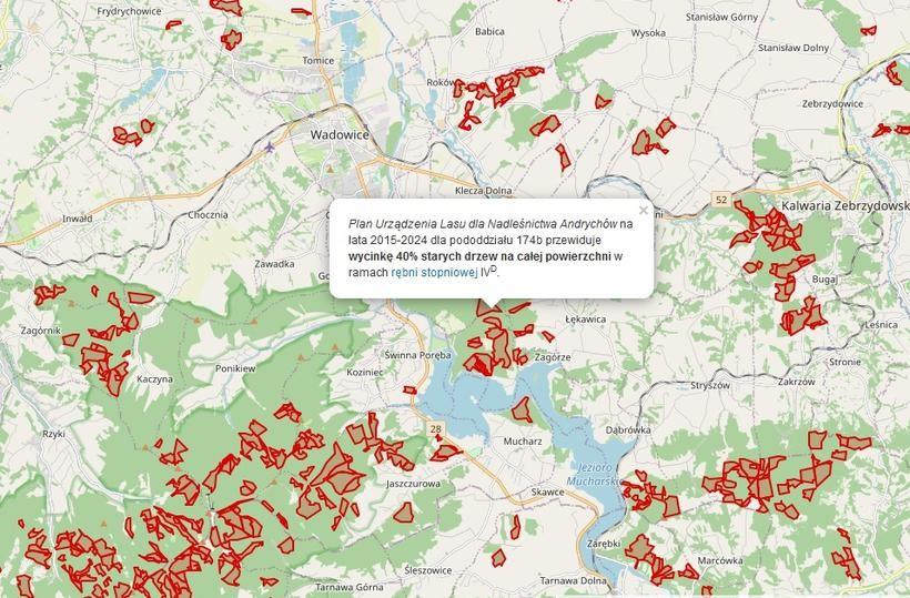 Stworzyli mapę, na której pokazują planowaną wycinkę lasów. U nas też będą rębać