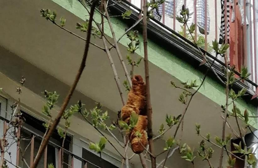 """Potworny """"lagun"""" terroryzował mieszkańców osiedla? Na drzewie zawisł..."""