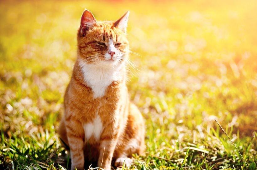 Co może jeść kot?