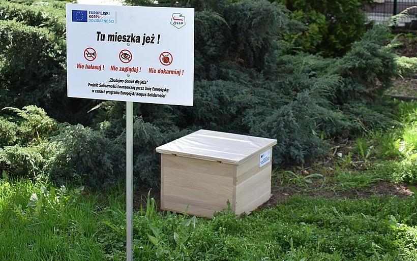 Jeże w Wadowicach zagrożone wyginięciem. Komisja Europejska i wolontariusze budują im domki
