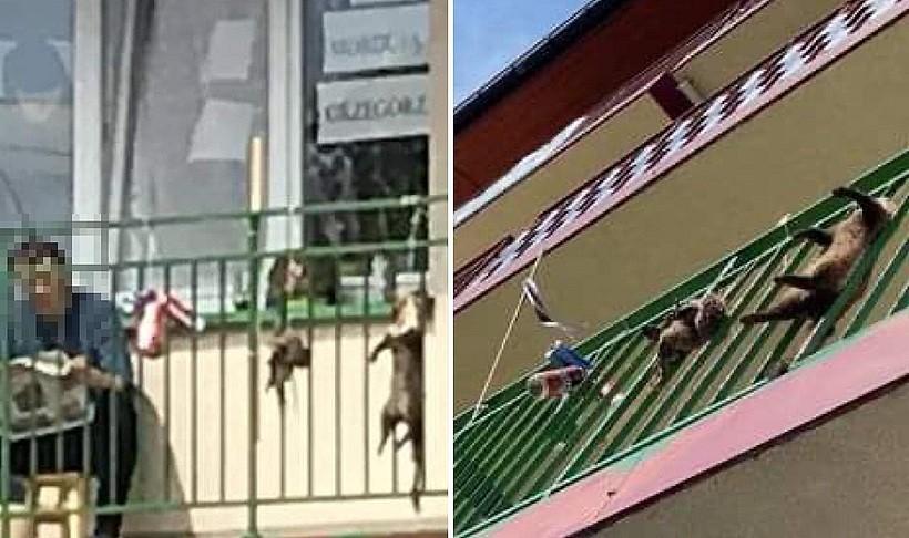 Policja zatrzymała mężczyznę, który w Kalwarii Zebrzydowskiej wieszał martwe zwierzęta