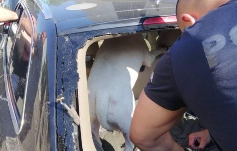 Zostawił psa w rozgrzanym aucie. Policja wybiła szybę, właściciel miał pretensje