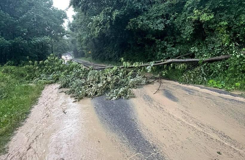 Drzewo powalone na drogę w Barwałdzie