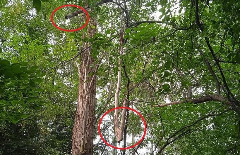 Silnie wieje, stare drzewa połamane. Strażacy interweniowali w Lanckoronie