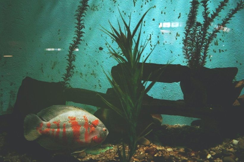 Jakie rośliny można mieć w akwarium?