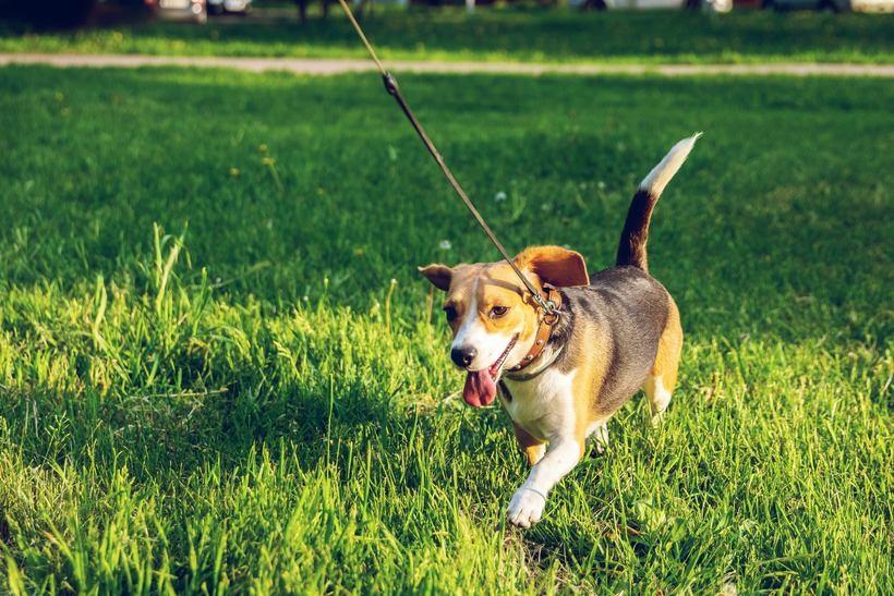 Dowiedz się więcej o usłudze wyprowadzania psa na spacer