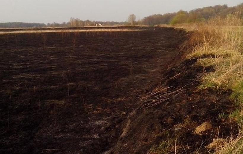 W Przybradzu paliły się szuwary w opuszczonym stawie