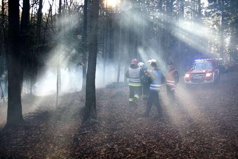Scenariusz był jednym z najgorszych - w lesie wybuchł pożar, a samochód uderzył w drzewo
