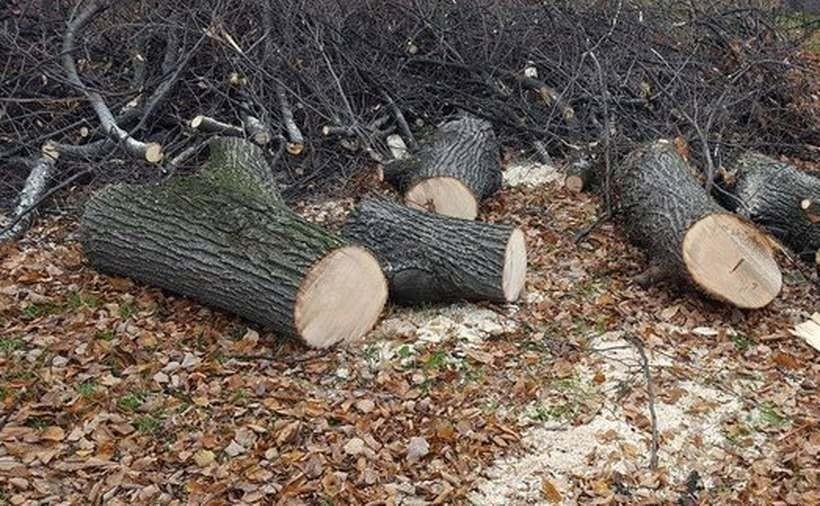 Wzięli piłę elektryczną i postanowili pościnać drzewa, ale... nie swoje