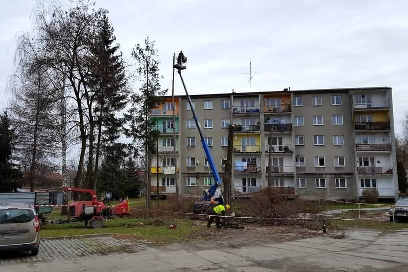 Wycinają wysokie drzewa w środku osiedla. Powstaje plac budowy