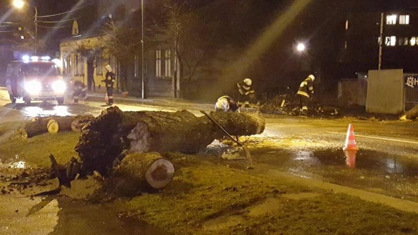 Drzewo upadło na ulicę Lwowską w Wadowicach
