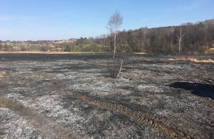 Ogień szalał na pięciu hektarach, zagrożony był las. Gehenna strażaków w prima aprilis