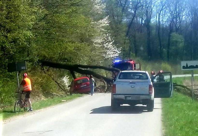 O włos od tragedii. Wielke drzewo runęło na drogę tuż przed samochodem