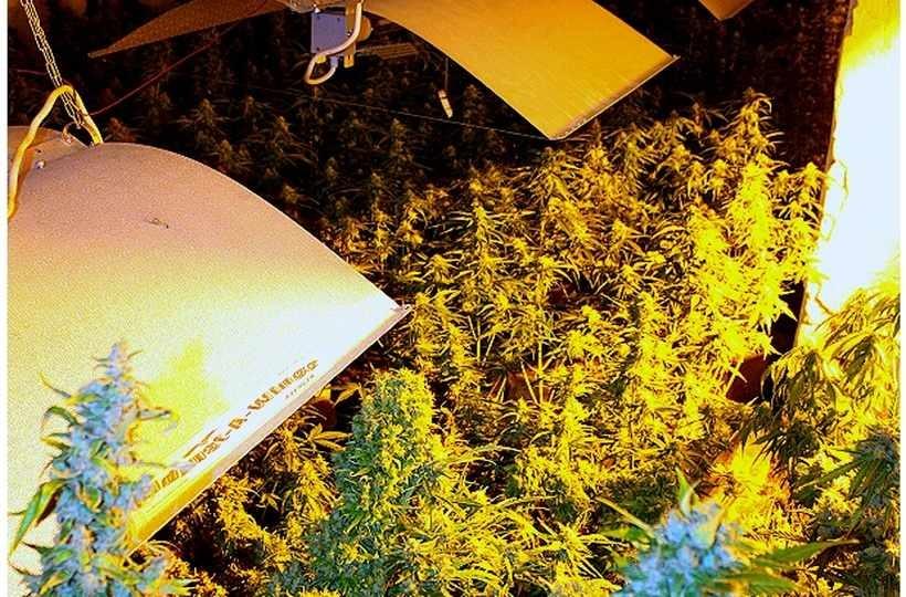 Produkowali marihuanę w stajni. Do akcji wkroczyli policjanci z Wadowic i CBŚP