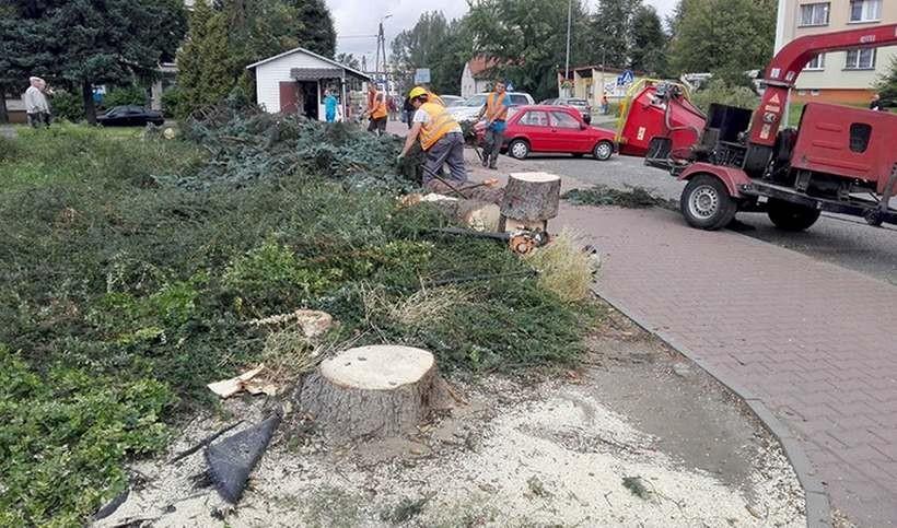 Przy ul. Włókniarzy w Andrychowie znikają drzewa