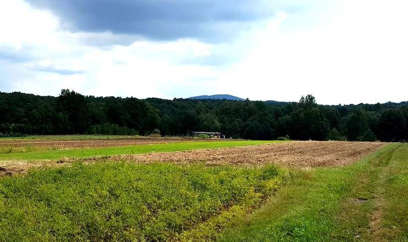 Żeby uprawiam ziemię musisz być rolnikiem, teraz każdy moze nim zostać