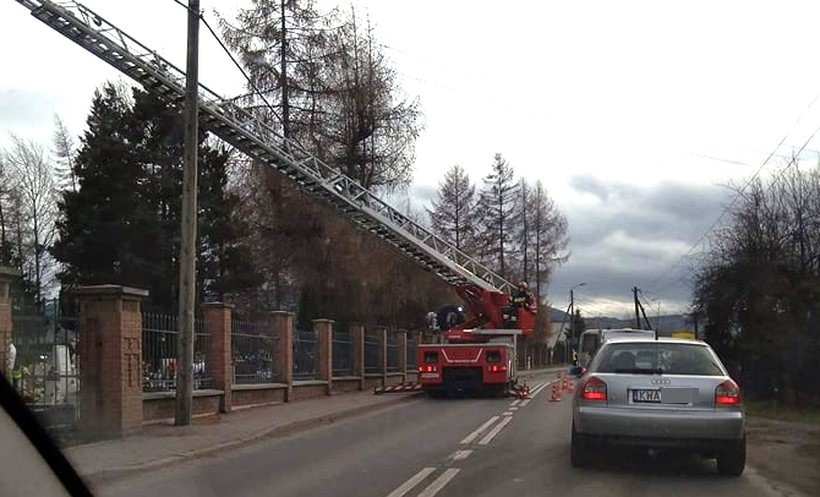 Wiatr przechyla drzewa na cmenatrzu w Andrychowie