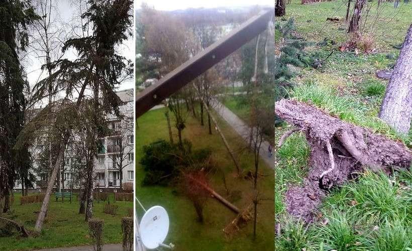 Wiatr wyrywał drzewa z korzeniami. Os. Kopernika i Pod Skarpą