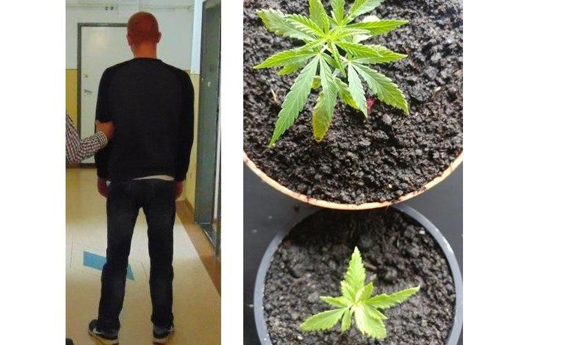 W mieszkaniu na terenie Wadowic znaleziono narkotyki. Policja mówi, że to nie koniec sprawy!