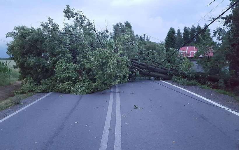 Wichura powaliła drzewo na drogę Witanowice-Wyźrał