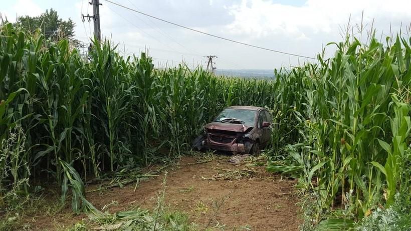 Auto skończyło jazdę w polu kukurydzy
