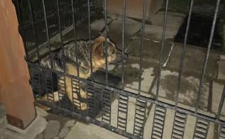"""Akcja pomocy w Witanowicach, ranny pies błąkał się po wsi: """"Sporo już wycierpiał"""""""