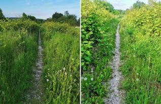 Ale się porobiło z tymi ścieżkami na wałach w Wadowicach! Zarosły trawą i nikomu nic do tego