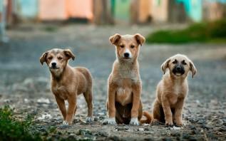 Jak znaleźć najlepszą suchą karmę dla swojego psa?