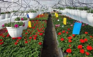 Potrzebujesz kwiatów lub sadzonek warzyw? Zapraszamy do Tomic