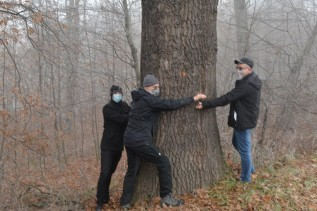 """Siekierezada w Kleczy Dolnej? W obronie starych dębów: """"Dla lasu to katastrofa"""""""