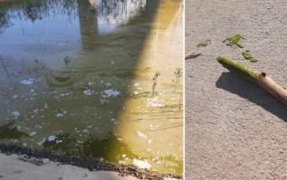 Sinice znów straszą na Jeziorze Mucharskim. Uwaga! Mogą być toksyczne
